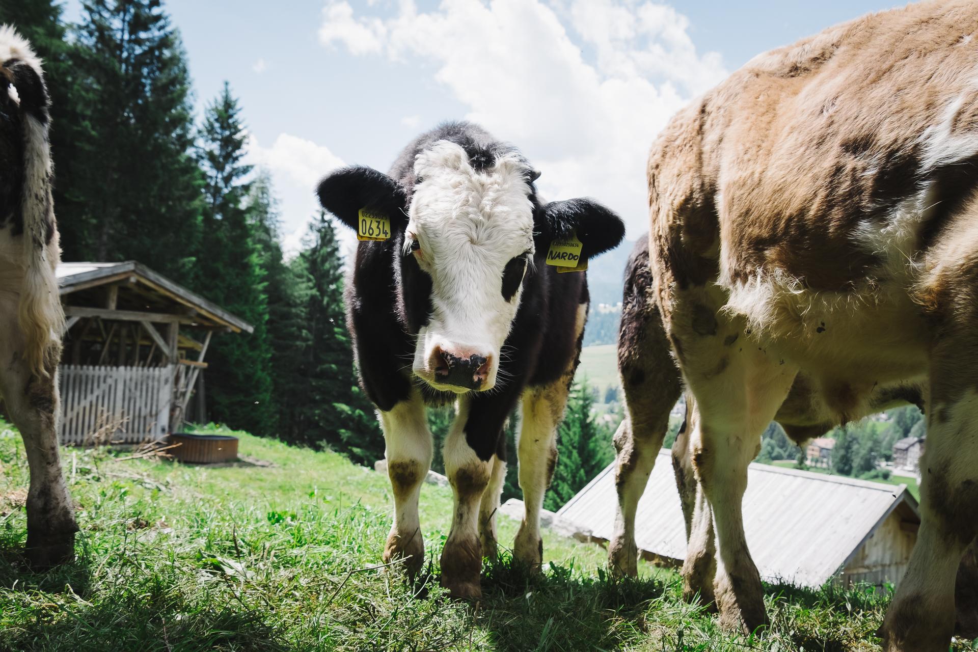 Val di Fassa, Canazei, Italy, Travel, Trentino