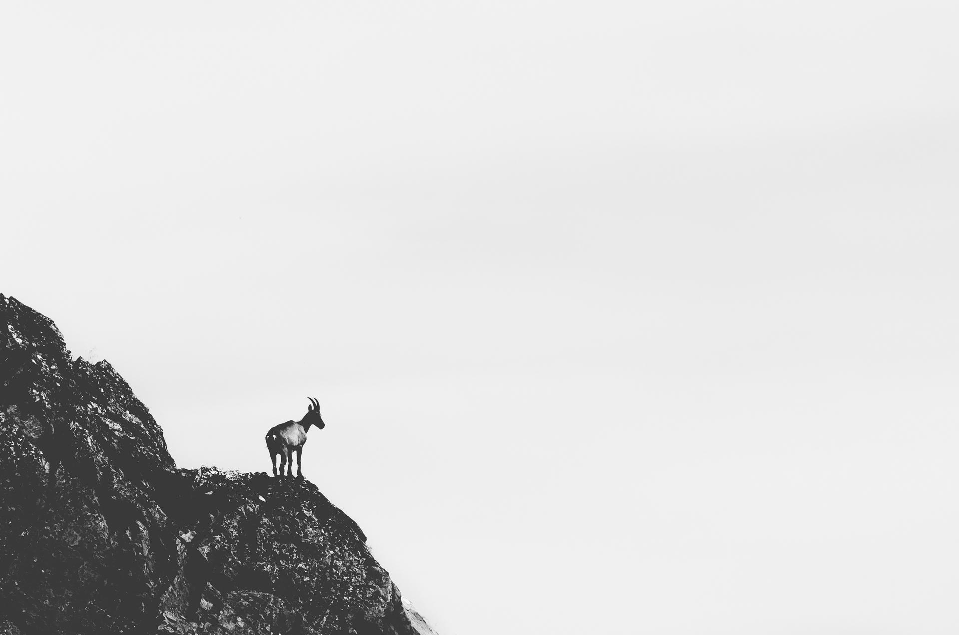 Chamonix, Lac Blanc, Alps, Ibex